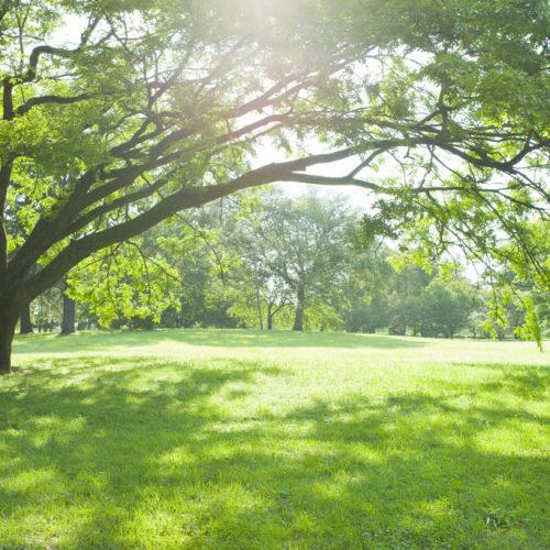L'importance des espaces verts du Sud-Bénin
